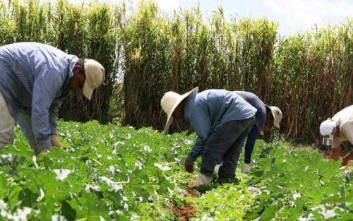La agricultura y el medio ambiente van de la mano
