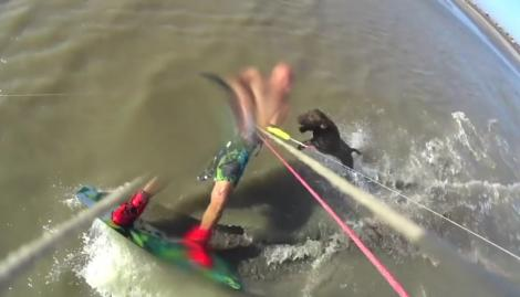 """El brutal ataque de un pitbull a un hombre que practicaba kitesurf: """"Me tiró un tarascón al cuello"""""""