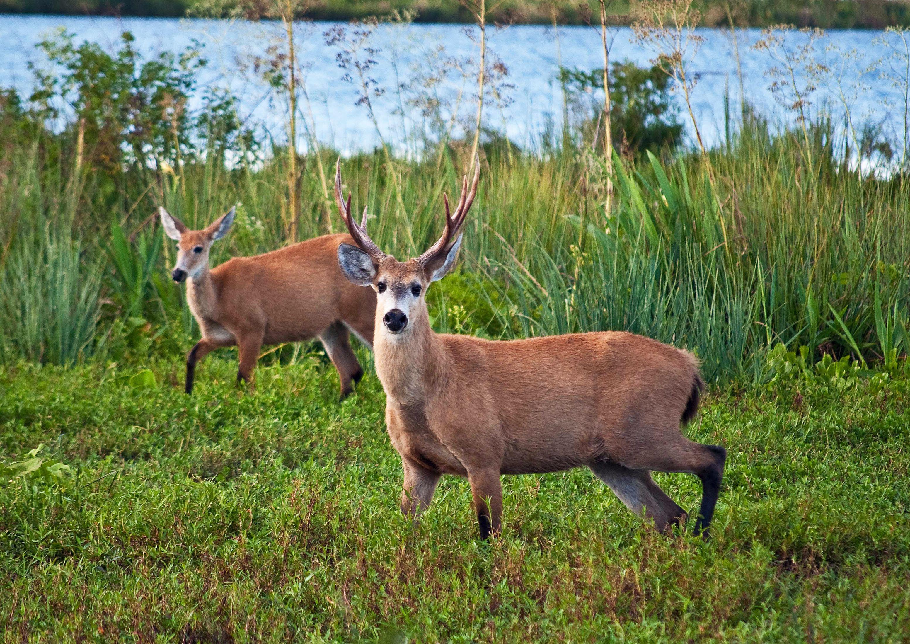 Conocé el Parque Nacional en el que viven ciervos, a sólo una hora de la ciudad de Buenos Aires